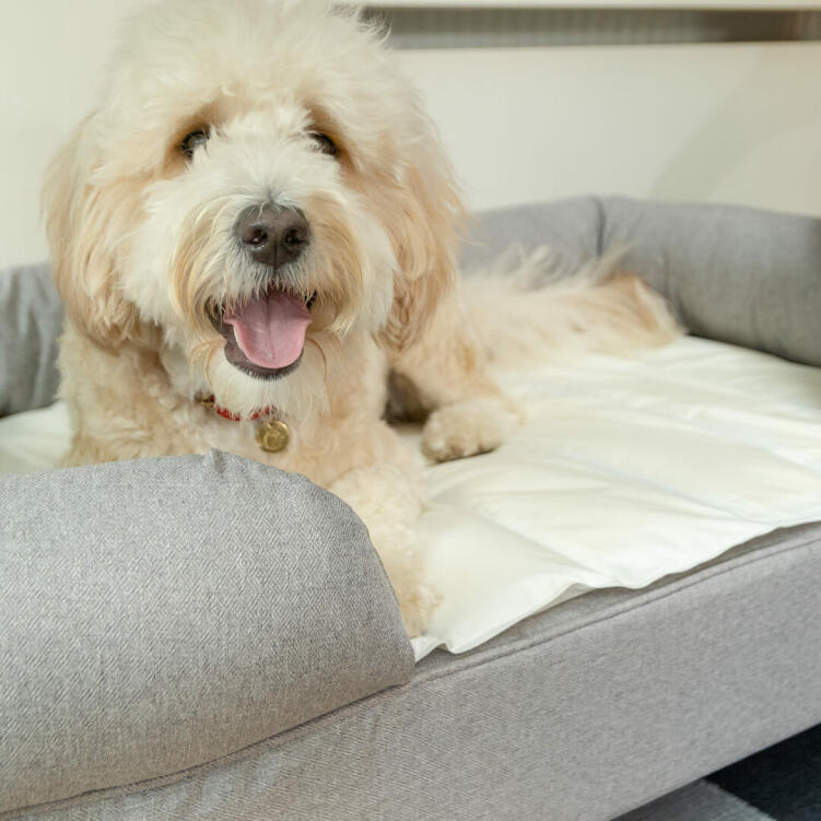 For a luxury nap for your dog, integrate the cooling mat with your Bolster Bed from Omlet by tucking the mat under the supportive bolster.
