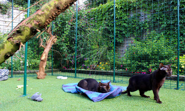 Burmese cats exploring the spacious Outdoor Cat Run