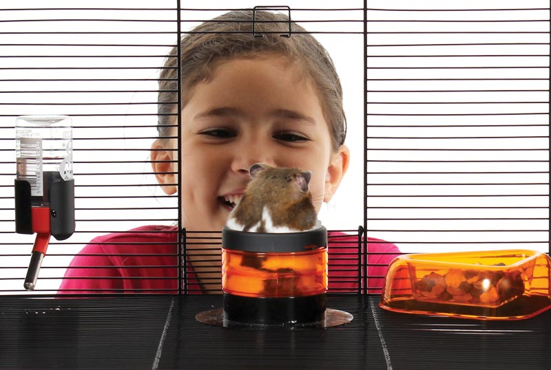 Kid looking at his hamster playing in the Qute