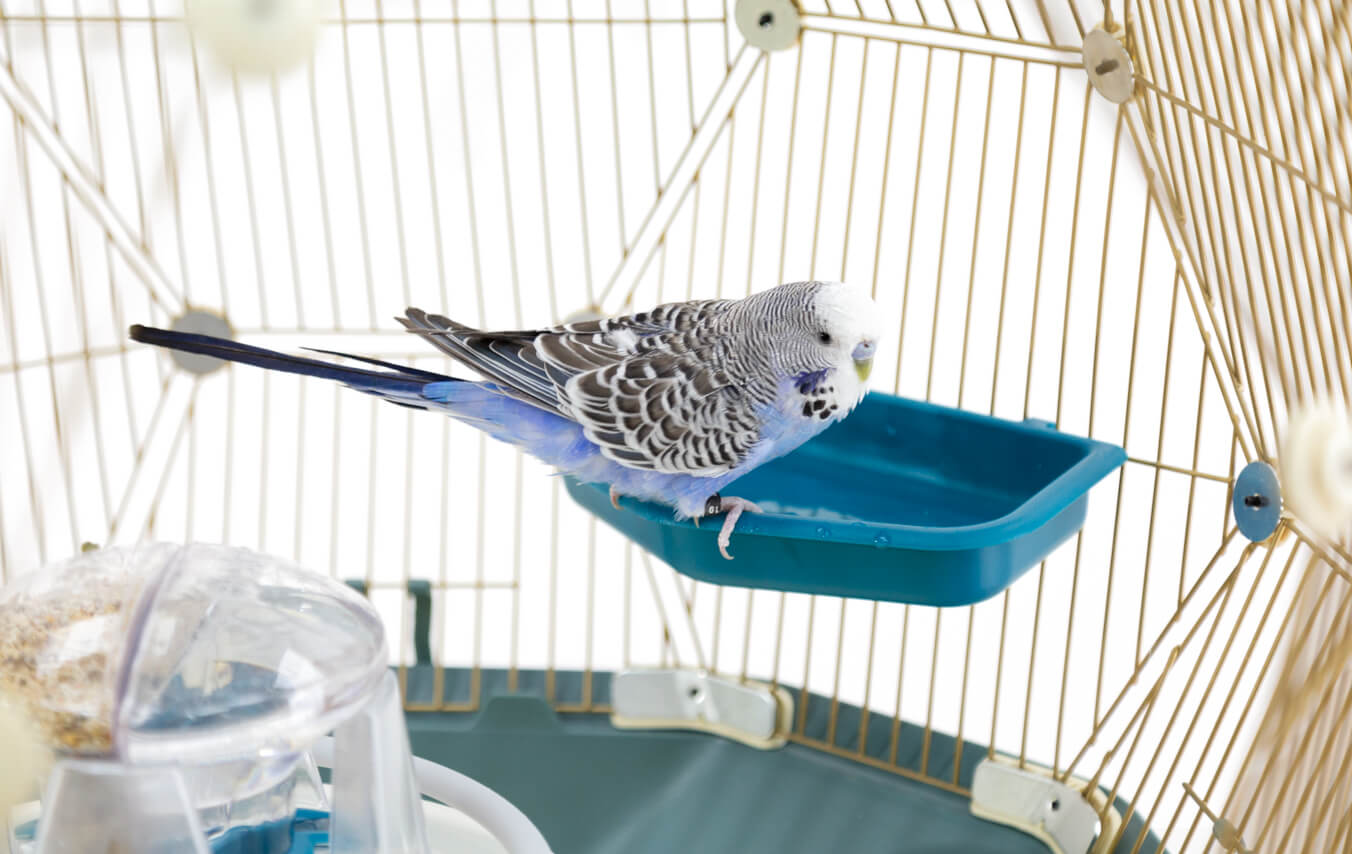 Bathing is an essential part of plumage maintenance for birds