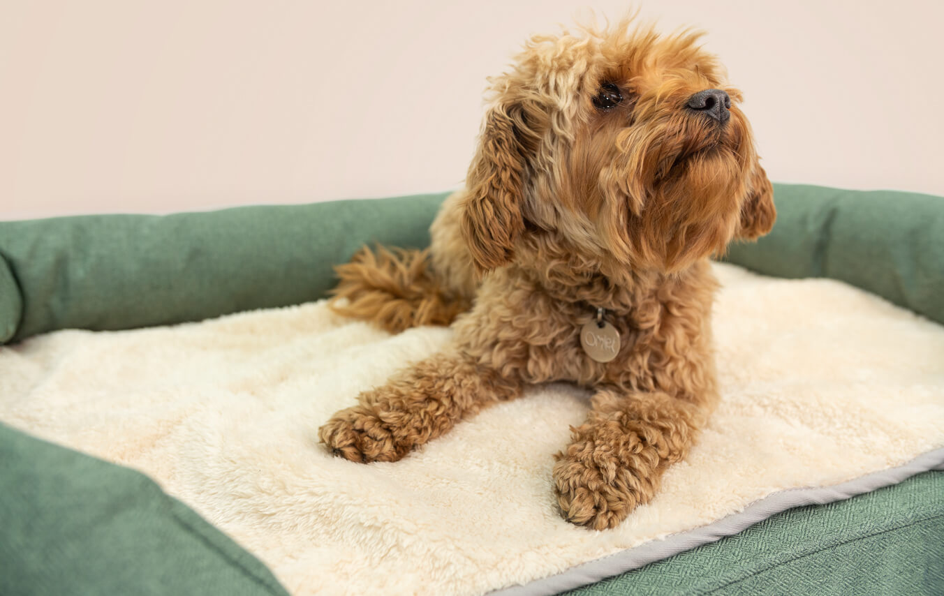 The super soft blanket will be a great addition to your dog's sleep setup.