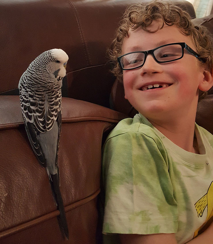budgie and boy