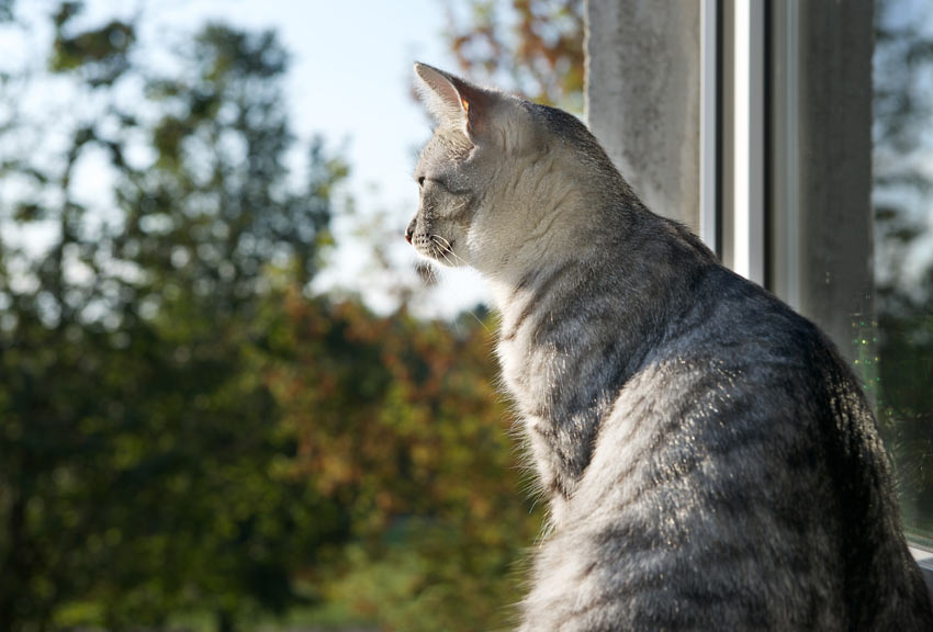 A beautiful young cat looking out the wonder