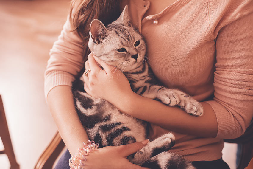 A_cat_being_craddled_by_its_owner
