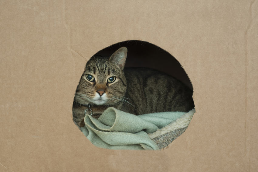 A cat lying down inside its box ready to move house