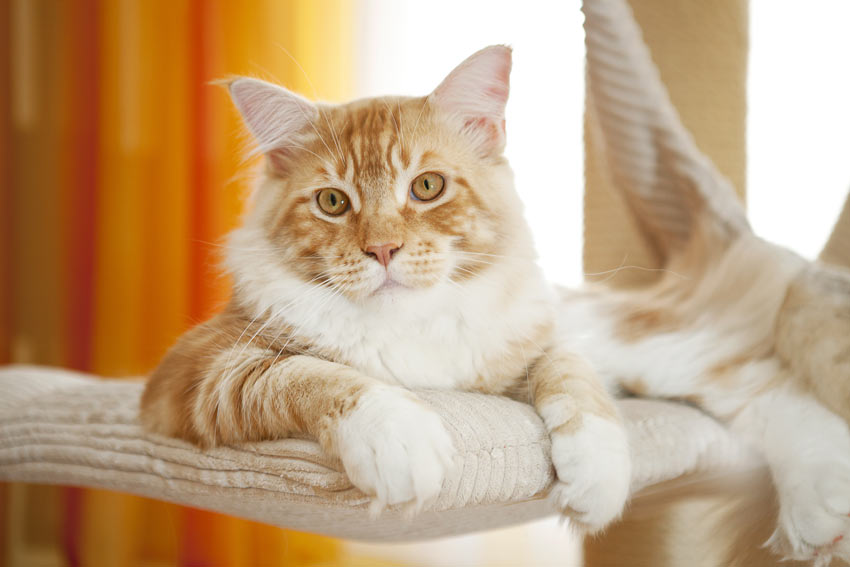 A ginger and white cat relaxing inside