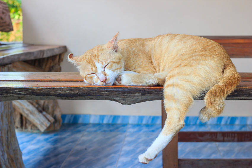 A ginger and white cat sleeing indoors
