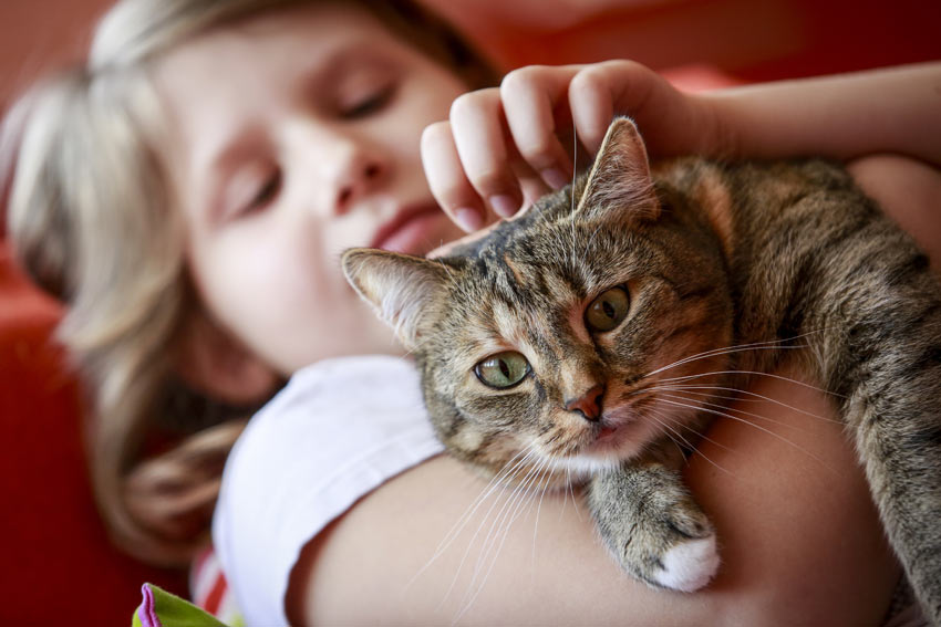 A young child holding her beautiful new cat