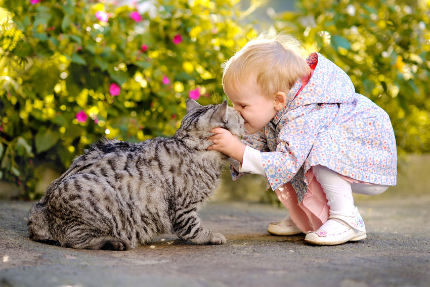 A young girl cuddling her beautiful tabby cat