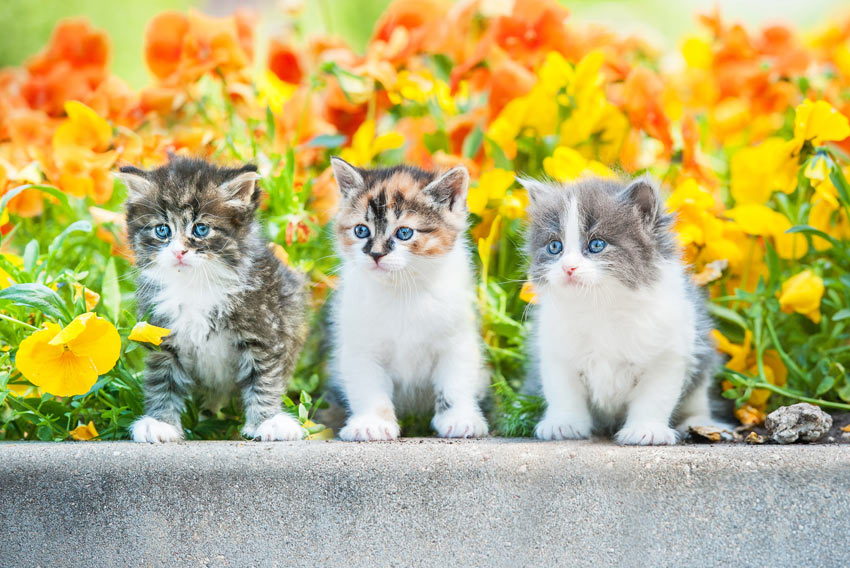Three lovely little kittens sitting on a wall