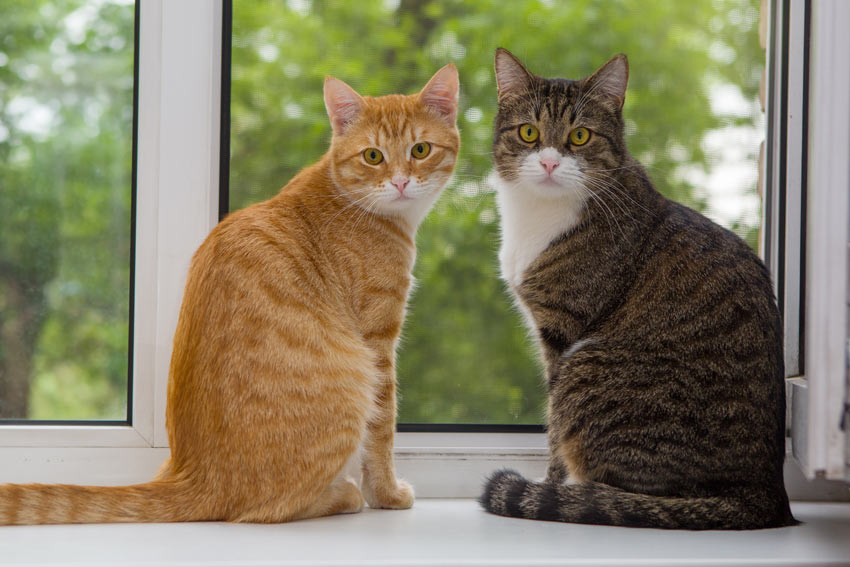 Two beautiful moggy cats sat on a window ledge