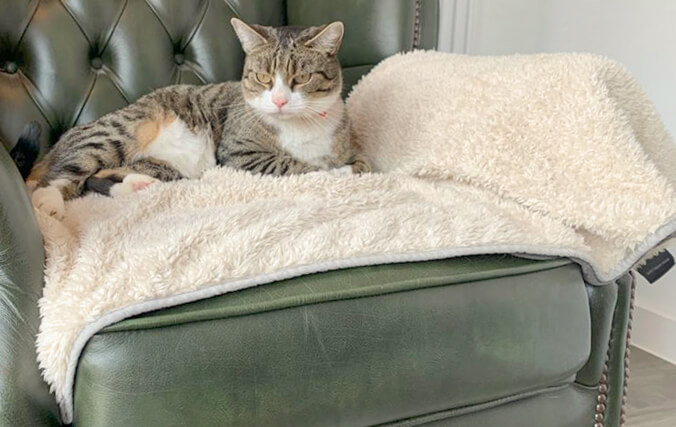Place the blanket on your cat's favourite piece of furniture to protect from fur, dirt and sharp claws.