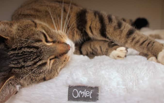 Cat relaxing on the Omlet Maya Donut Bed. Provide Complete Relaxation With the Maya Donut Bed.