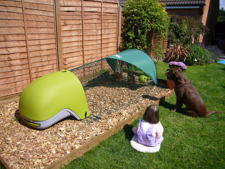 A little girl and her Labrador looking after her chickens