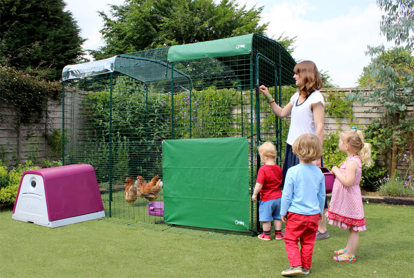 Omlet chickens enjoying their walk in run with some children and Eglu go