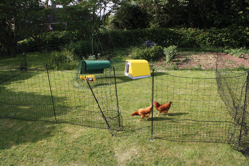 The Omlet fencing keeping the chickens out of the vegetable patch