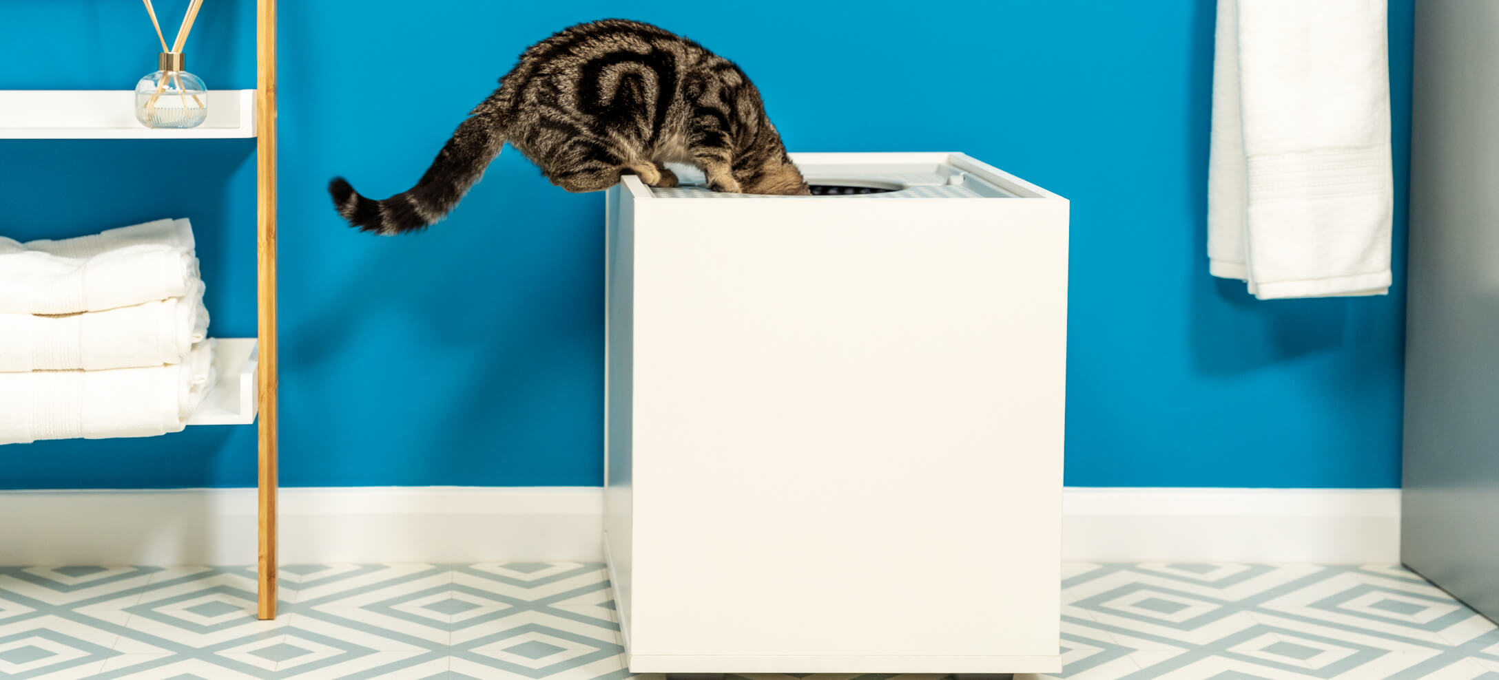 A tabby cat looking into a white litter box