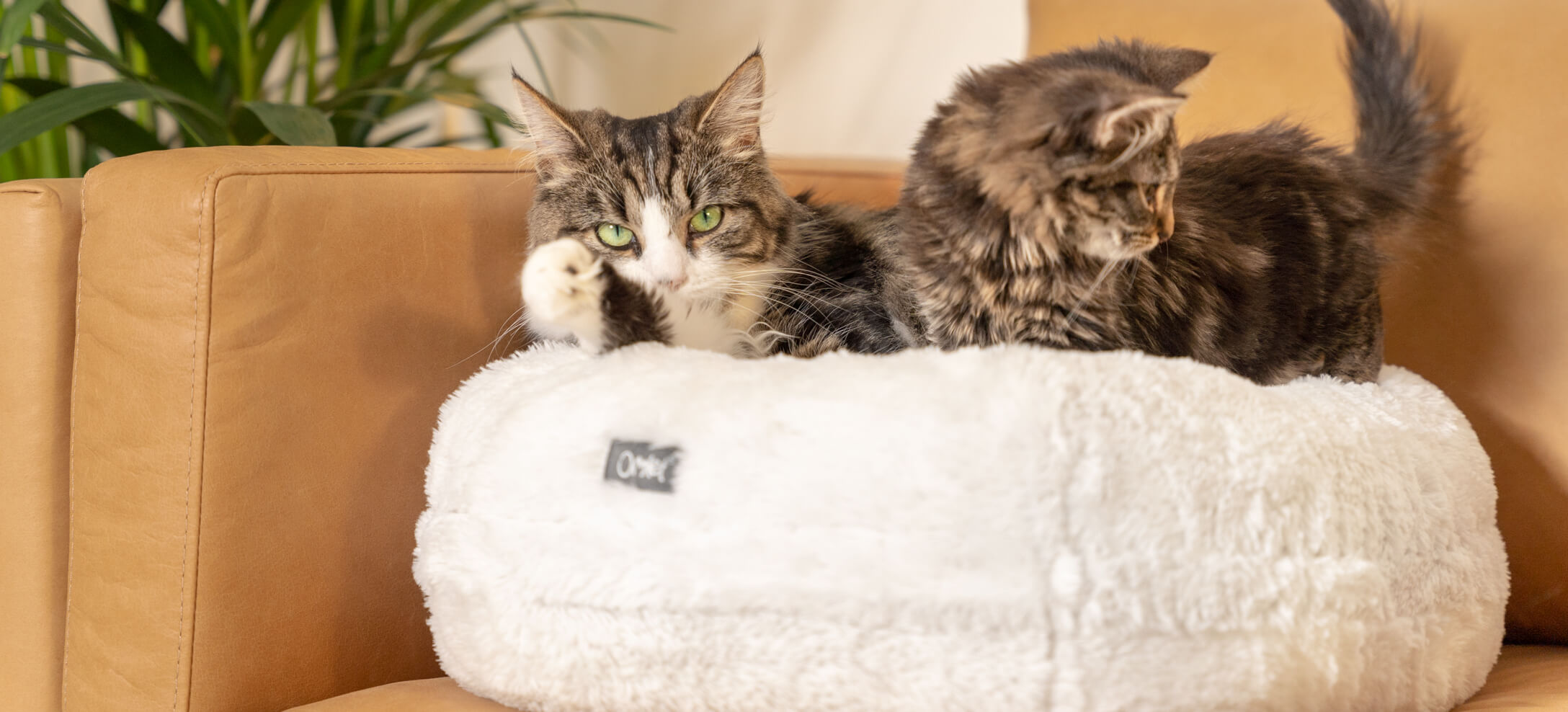 Two cats sharing a white cat bed placed on a sofa