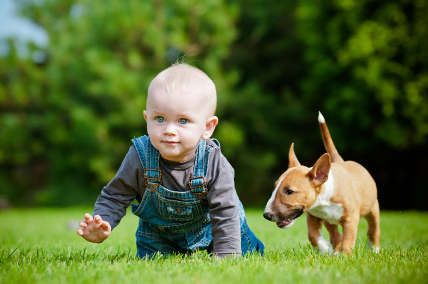 A baby and an English Bull Terrier playing on the grass