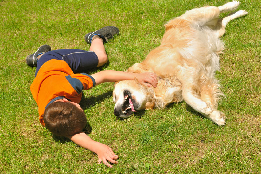 A young boy rolling around on the grass with his Golden Retriever