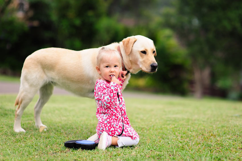 A young girl outside with her Labrador