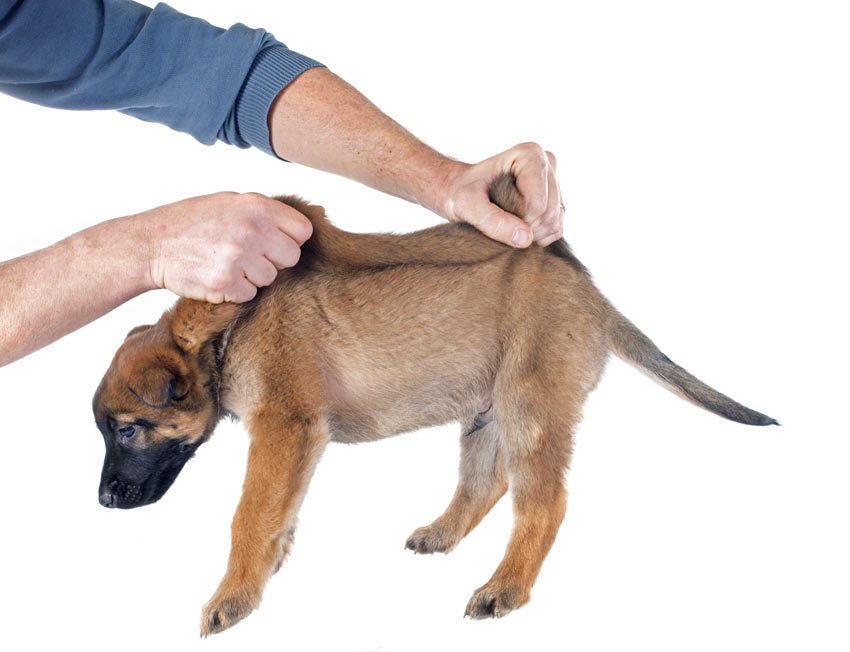 How to pick up a puppy by the scruff