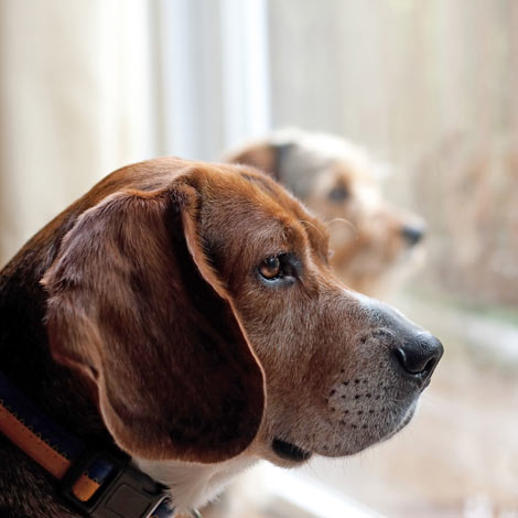 Two bored dogs left at home with nothing to do
