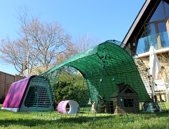 The Eglu Go Rabbit House in a backyard