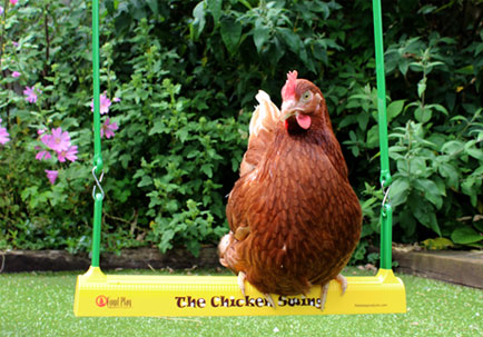 A Gingernut Ranger perching on The Chicken Swing