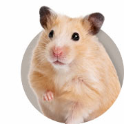 Hamstergids