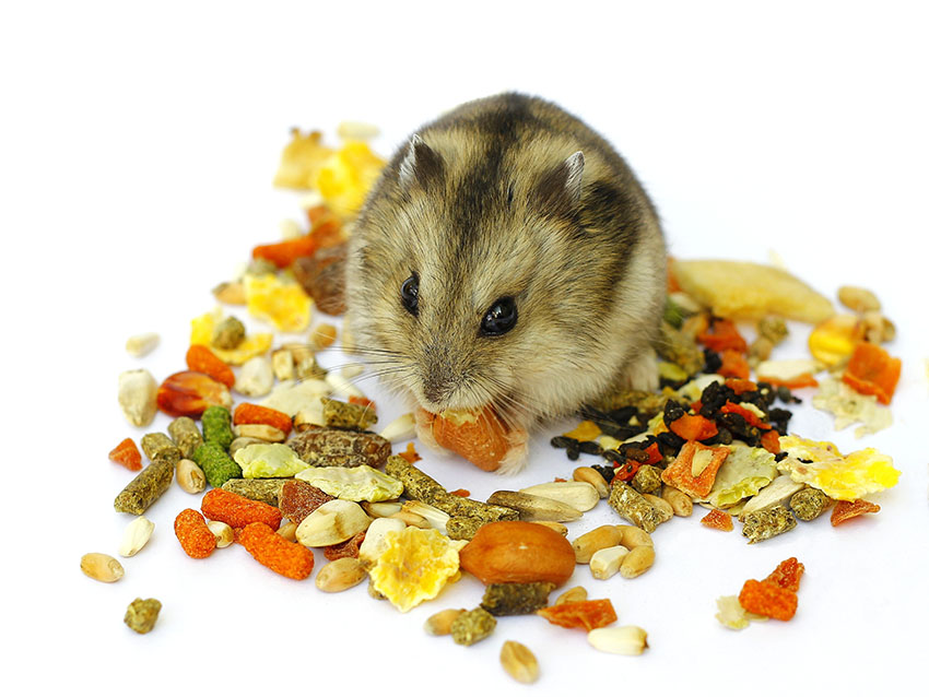 hamsters like different foods