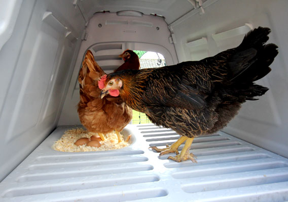 The interior of an Eglu Go UP chicken coop.