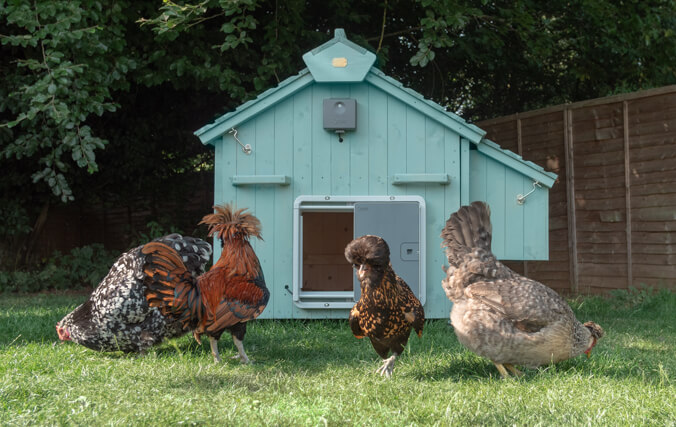 The wooden coop arrives untreated, so that you can choose the look that best suits you and your garden.