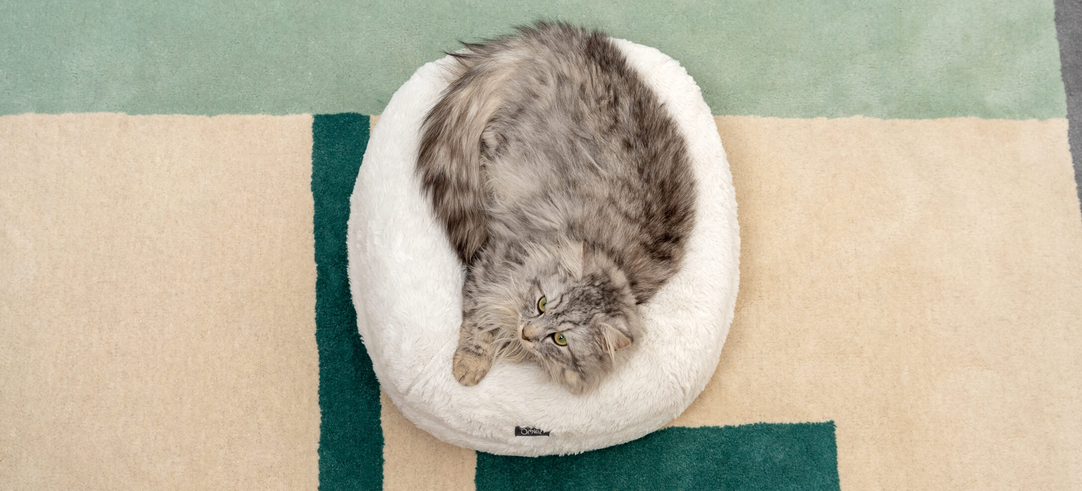 A fluffy grey cat resting on a donut cat bed