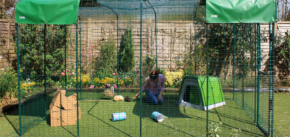 An extended 9ft x 13ft x 6ft Outdoor Guinea Pig Run will give your pets lots of space to run around in.