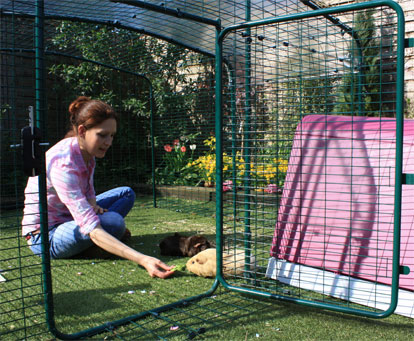 The Low-Rise Outdoor Guinea Pig Enclosure has a large door, giving easy access to your pet guinea pigs.