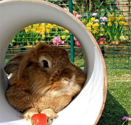 Your pet rabbit will be happy and safe in its Outdoor Rabbit Run.