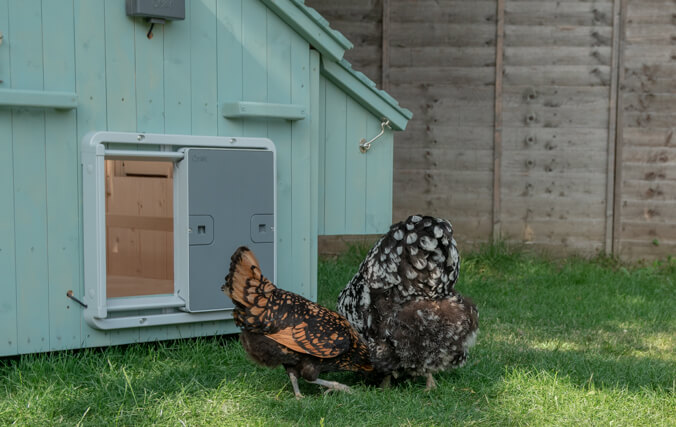 The Omlet Autodoor can easily be attached to the Lenham, making it even more straightforward to keep your chickens happy and safe.
