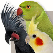 Parrot Guide