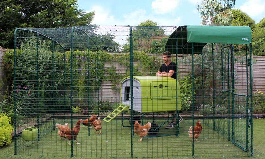 Man standing inside the Omlet walk in chicken run with the Eglu Cube chicken house.
