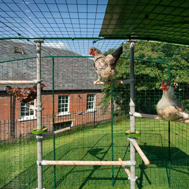 Discover the accessories for the customisable PoleTree chicken perch system