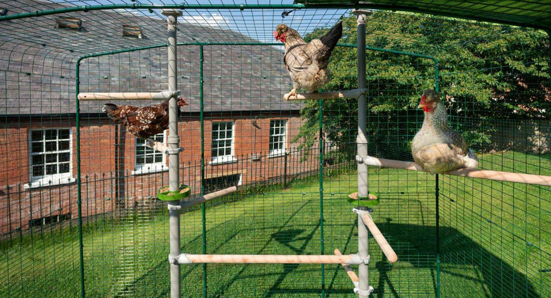 Discover the accessories for the PoleTree chicken perch system with Omlet's highlights