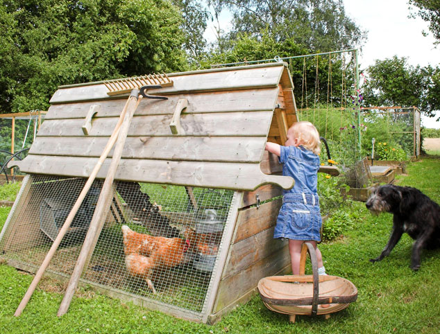 Young child collecting eggs from Boughton chicken coop.
