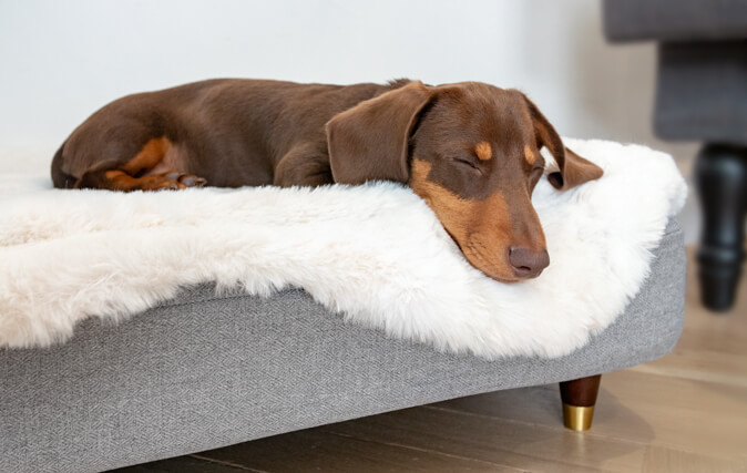 Spoil Your Dog to a New Topper for Their Unique, Stylish Bed