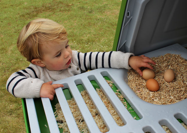 Collecting eggs is easy with this chicken coop