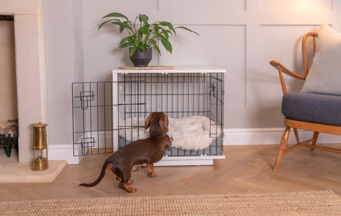 Wide Range of Omlet Dog Beds to Fit in Your Fido Studio
