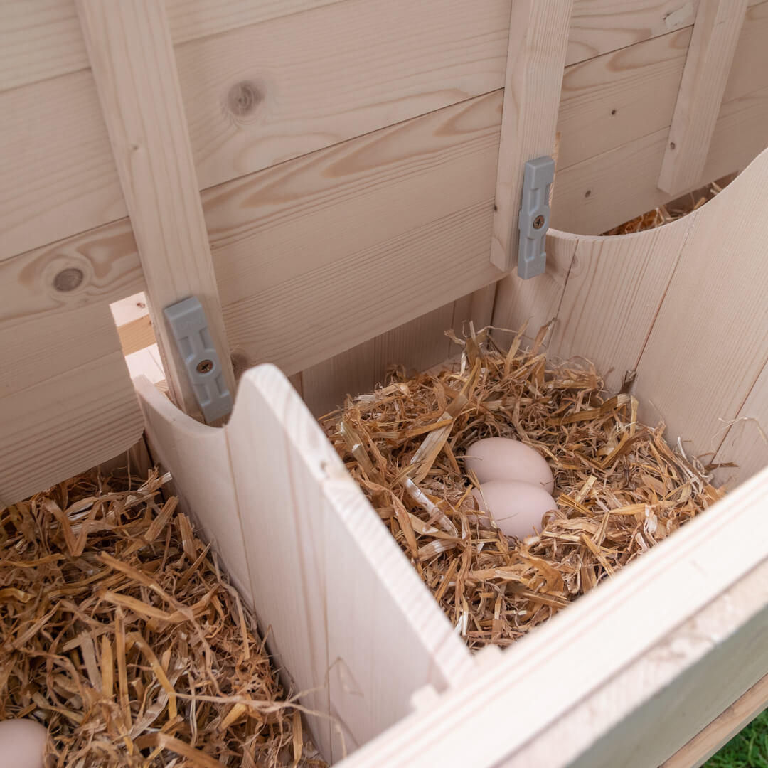 The nest boxes can be shut at night, and the whole side section can be removed for easy cleaning.