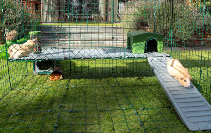 Pets Can Use All Year, With Insulated Panels and Shade Below
