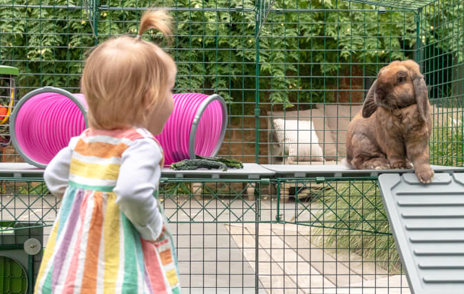 The Zippi Platforms allow you to add a new exciting level to your rabbits' run, encouraging interactive play and exercise.