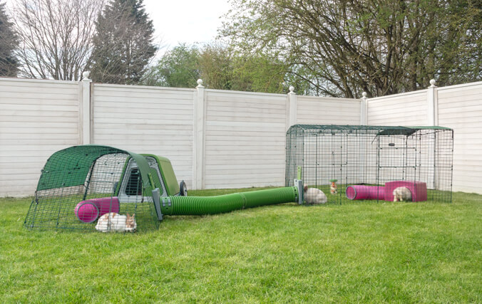 Connect your Eglu Go Hutch to a Zippi Rabbit Enclosure for the Ultimate bunny tunnel playground.